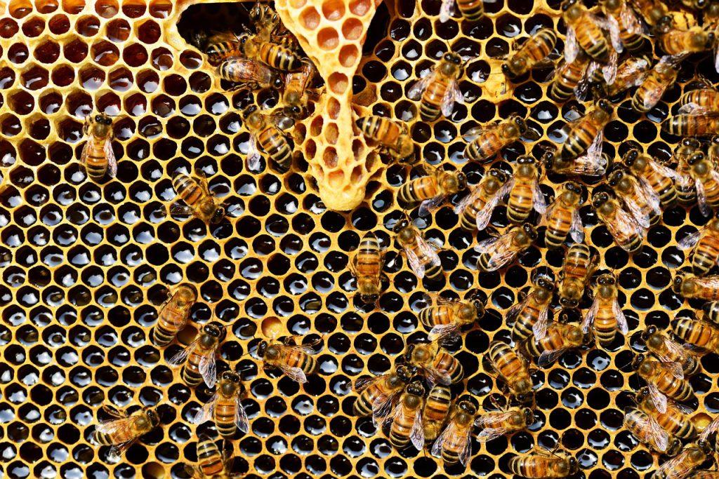 Bienen, Bienenschwarm